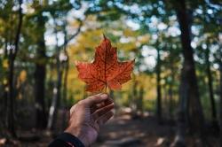 تحصیل در کانادا | مجله سلامت یاثار