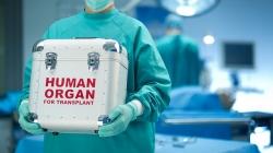 پیوند کبد در بیمارستان مموریال ترکیه | مجله سلامت یاثار