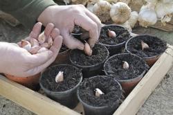 مناسبترین گیاهان دارویی برای رشد در خانه | مجله سلامت یاثار